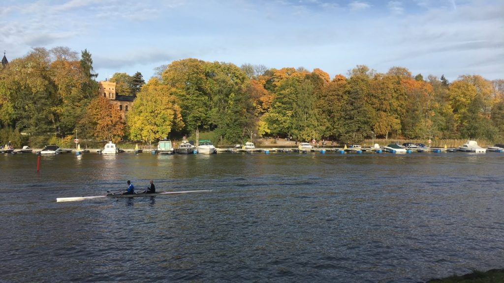 fall foliage overlooking the water in Stockholm, Sweden