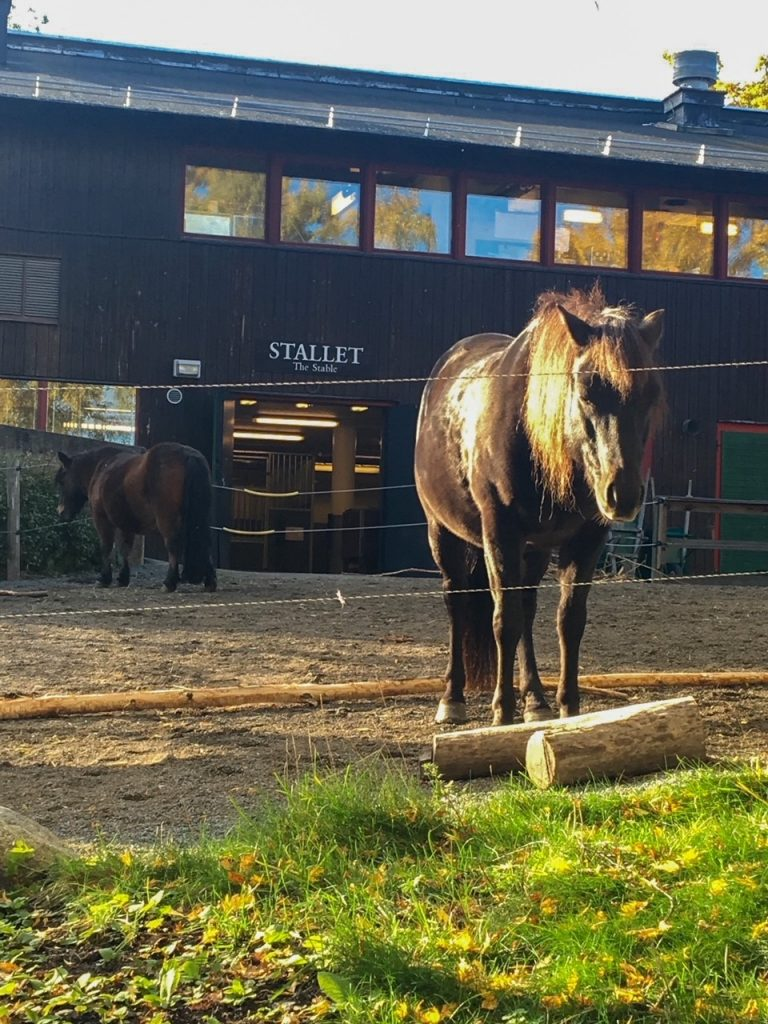 a horse at Skansen